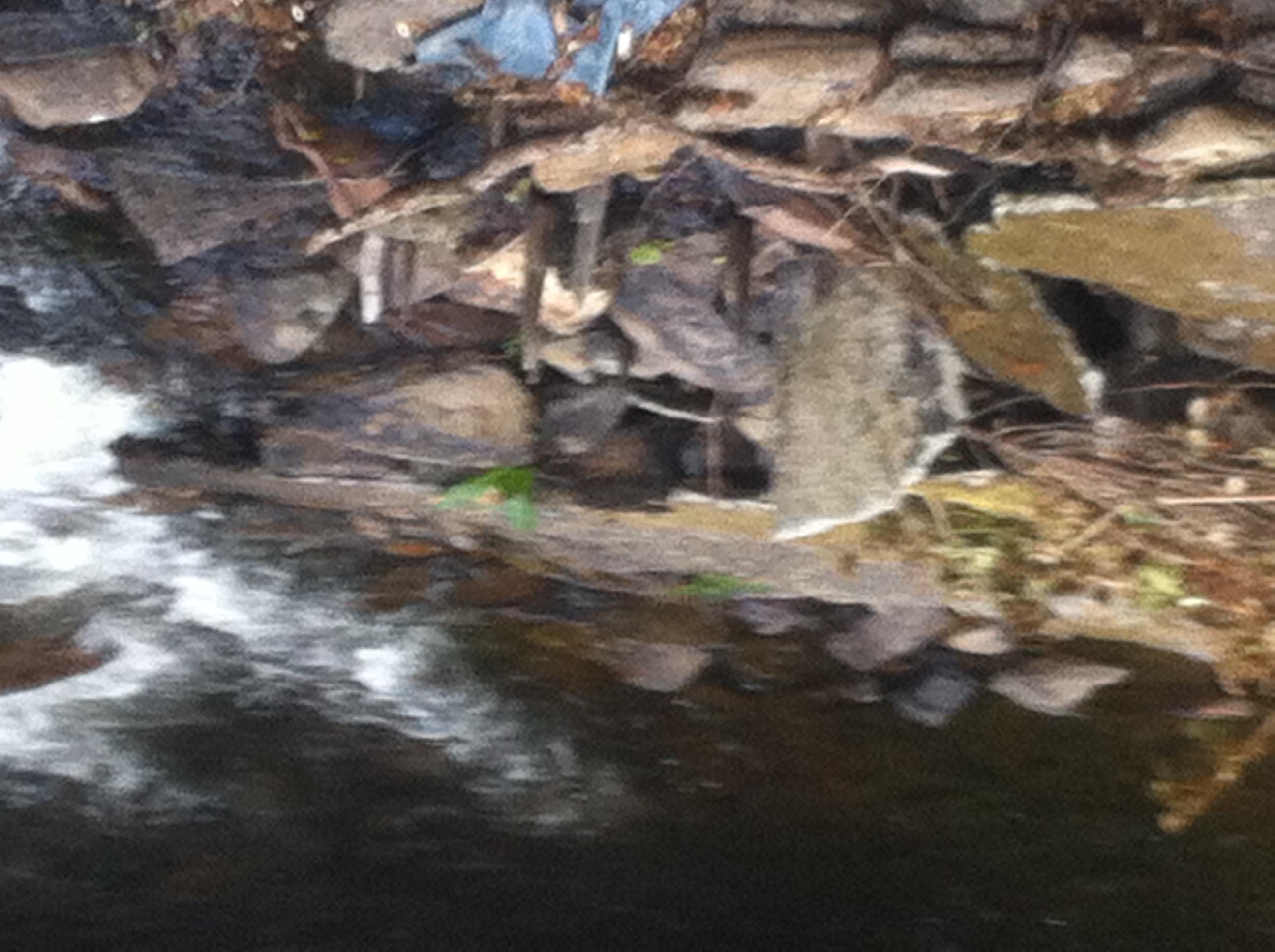 Oak stakes still visible in weir structure 2014 (1)
