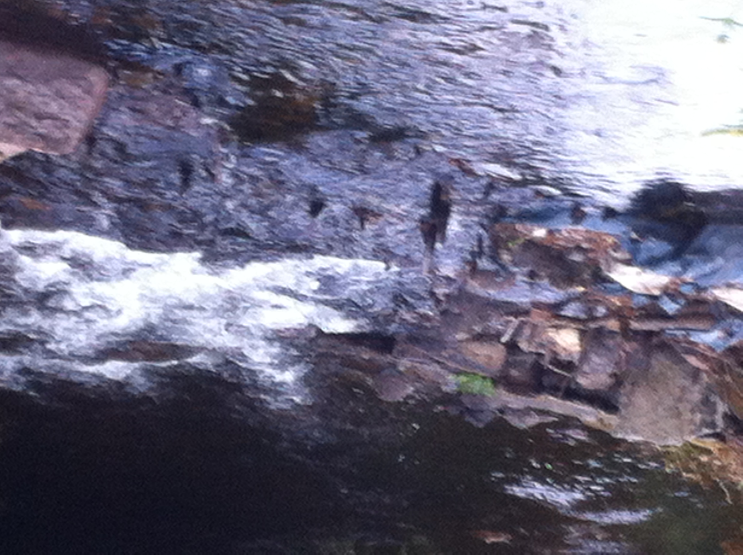 Oak Stakes still visible in weir structure 2014 (3)