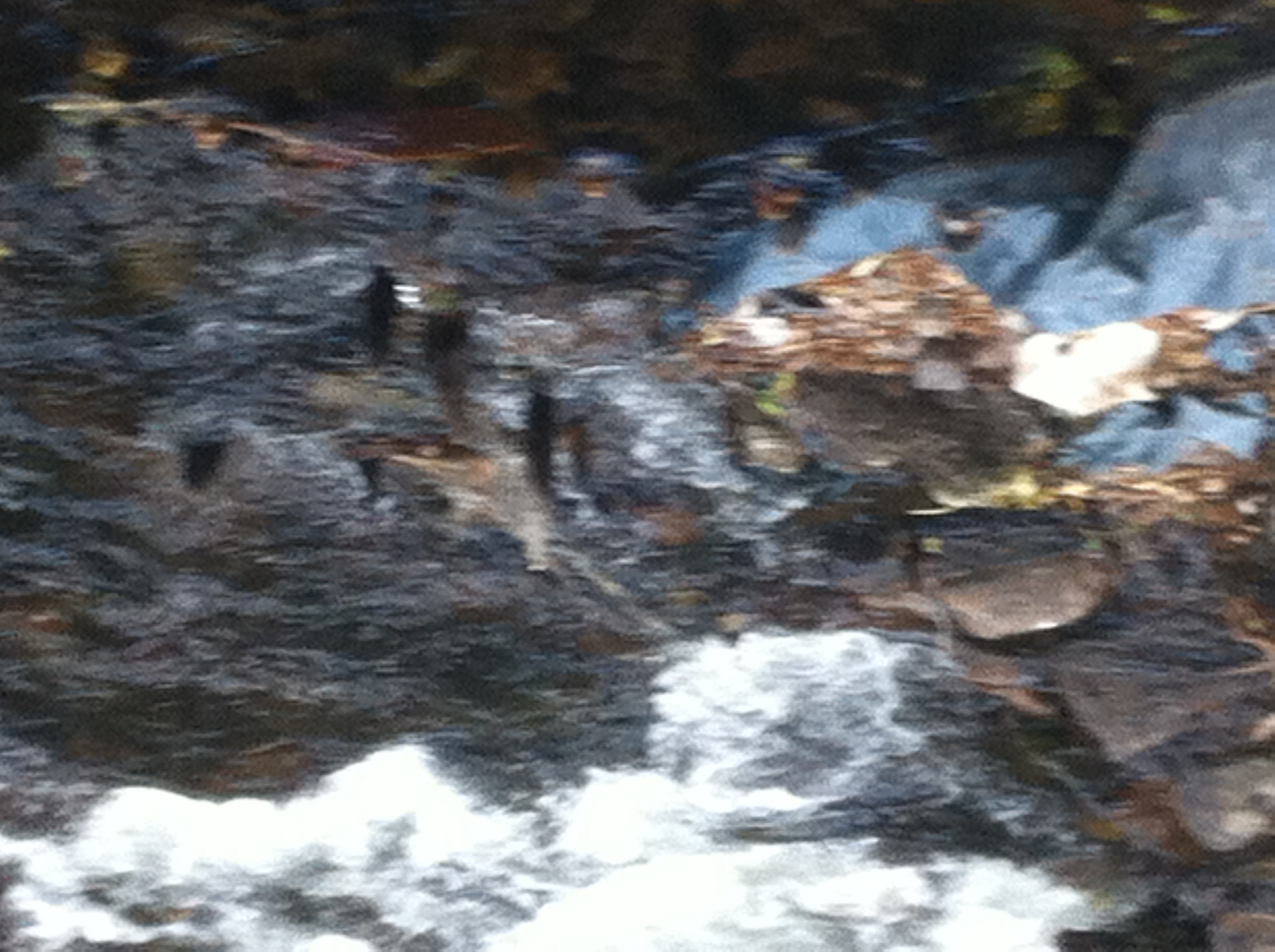 Oak stakes still visible in weir structure 2014 (4)