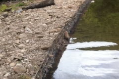 Temporary repair on the weir 2014